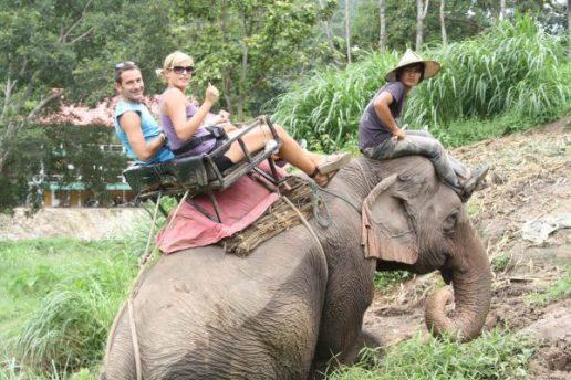 elefante_chiang_mai