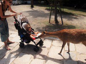 p9102368 1 300x225 - ¿Qué visitar en Japón con niños?