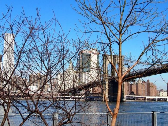 p2242642 e1522851546880 654x491 - Día 4 de Nueva York con bebé: ¡Por fin visitamos el puente de Brooklyn!