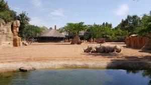 bio rinocerontes 300x169 - ¡Visitamos el Bioparc Valencia con niños!