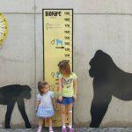 bioparc altura 150x150 - ¡Visitamos el Bioparc Valencia con niños!