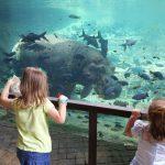 bioparc con hipopotamo 150x150 - ¡Visitamos el Bioparc Valencia con niños!
