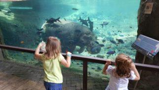 bioparc con hipopotamo