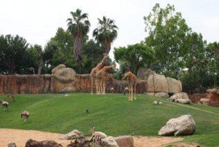 bioparc con jirafas