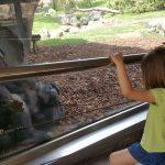 bioparc con orangutan 150x150 - ¡Visitamos el Bioparc Valencia con niños!