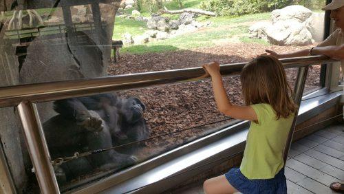 bioparc con orangutan