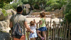 bioparc flamencos 300x169 - ¡Visitamos el Bioparc Valencia con niños!