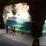 bioparc hipopotamos 150x150 - ¡Visitamos el Bioparc Valencia con niños!