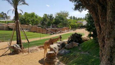 bioparc jirafa