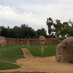 bioparc jirafas 150x150 - ¡Visitamos el Bioparc Valencia con niños!