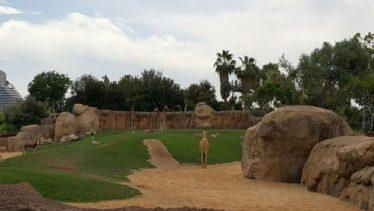 bioparc jirafas