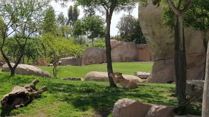 bioparc leon 300x169 - ¡Visitamos el Bioparc Valencia con niños!