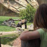bioparc mirando orangutan 150x150 - ¡Visitamos el Bioparc Valencia con niños!
