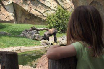 bioparc mirando orangutan