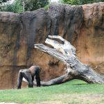 bioparc paisaje orangutan 150x150 - ¡Visitamos el Bioparc Valencia con niños!