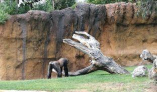 bioparc paisaje orangutan