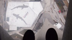 cnntower toronto 5 300x169 - Visitando Toronto con bebé, nuestro paso por Canadá