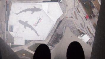 cnntower toronto 5 e1582476536472 355x199 - Visitando Toronto con bebé, nuestro paso por Canadá