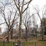 central park 150x150 - Teleférico de Roosevelt, museos, parques... en Nueva York con bebé