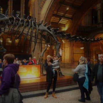 londres museo historia natural 2 356x356 - ¿Qué hacer gratis o casi gratis en Londres con bebé?