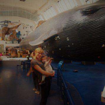 londres museo historia natural 4 356x356 - ¿Qué hacer gratis o casi gratis en Londres con bebé?