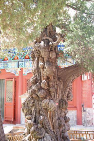 templo_confucio_pekin1