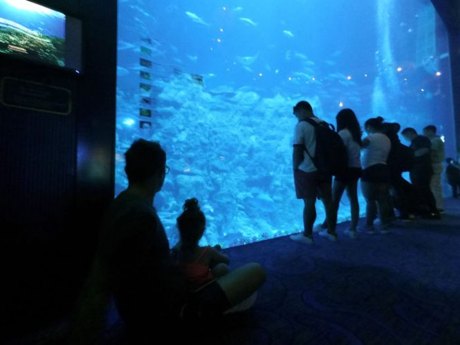 ocean_park (12)