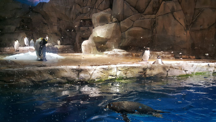 ocean_park (5)