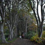 akureyri jardin botanico 150x150 - Road trip por Islandia en 7 días con niños