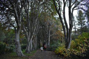 akureyri jardin botanico 300x200 - Road trip por Islandia en 7 días con niños