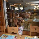 annecy restaurante granja1 150x150 - El lago y la ciudad medieval de Annecy con niños en un día