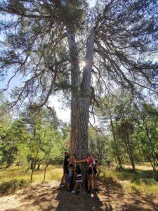 PINO ABUELO 225x300 - Las Lagunas de Cañada del Hoyo con niños y otras rutas imprescindibles