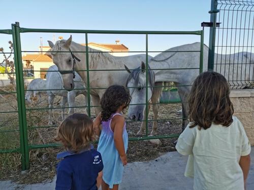rural reillo - Las Lagunas de Cañada del Hoyo con niños y otras rutas imprescindibles